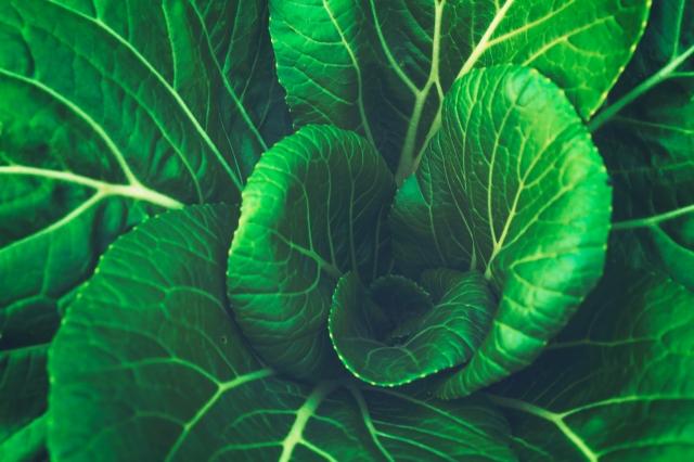 Aquaponic_Greens