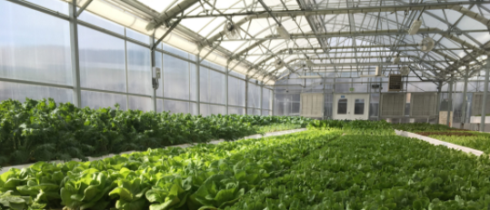 Aquaponic_Source_Greenhouse